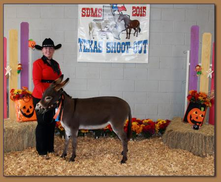 Rodeo Center Ranch Shows